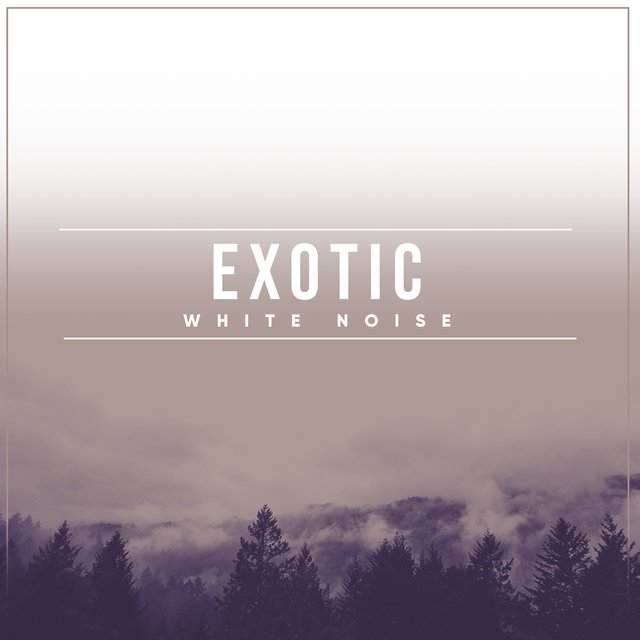 # 1 Album: Exotic White Noise