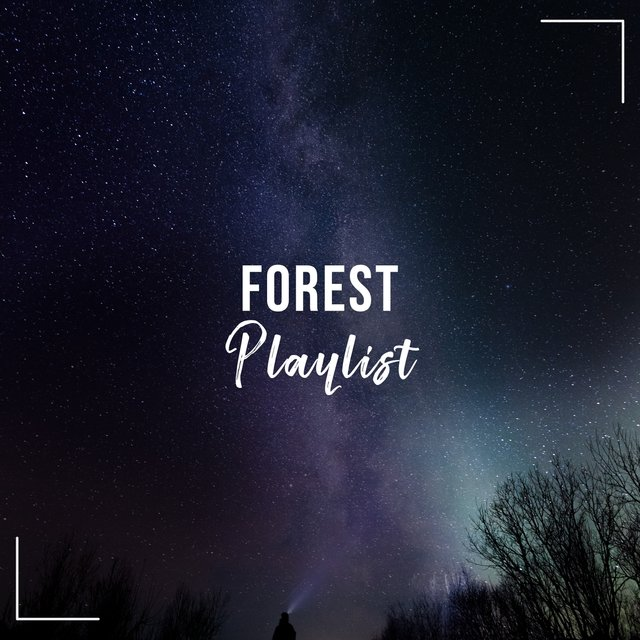 Mellow Sleepy Forest Playlist