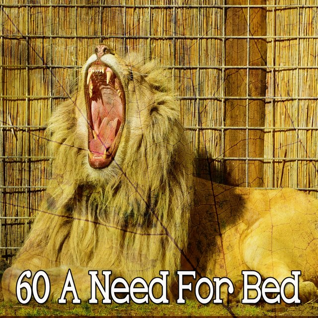 60 A Need for Bed
