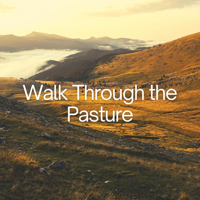 Walk Through the Pasture