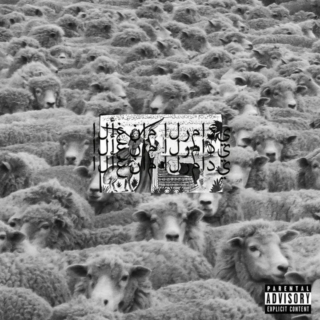 Grey Sheep II