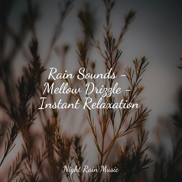 Rain Sounds - Mellow Drizzle - Instant Relaxation