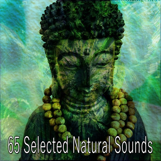 65 Selected Natural Sounds