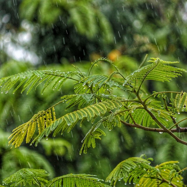 Stress Relief Tracks: Natural Rain Recordings