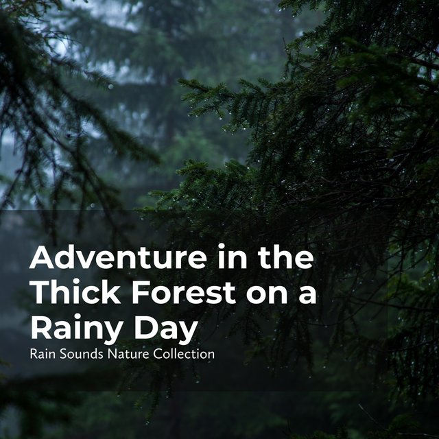 Adventure in the Thick Forest on a Rainy Day