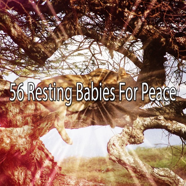 56 Resting Babies for Peace