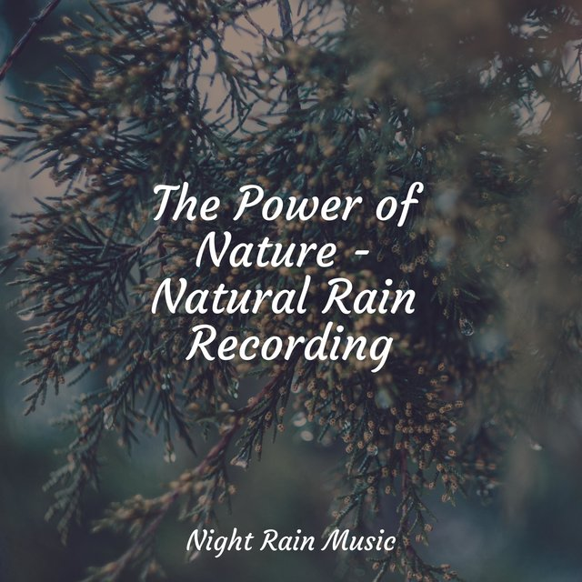 The Power of Nature - Natural Rain Recording