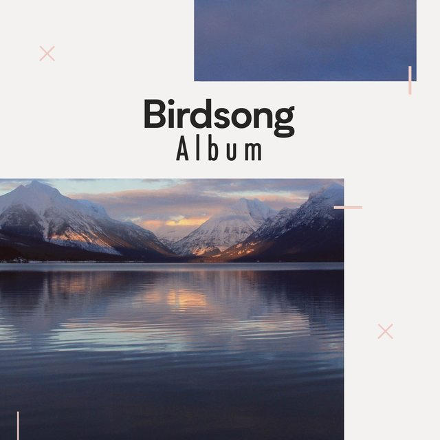 Soft Native Birdsong Album