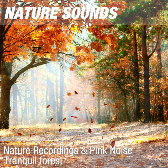 Nature Recordings & Pink Noise - Tranquil forest