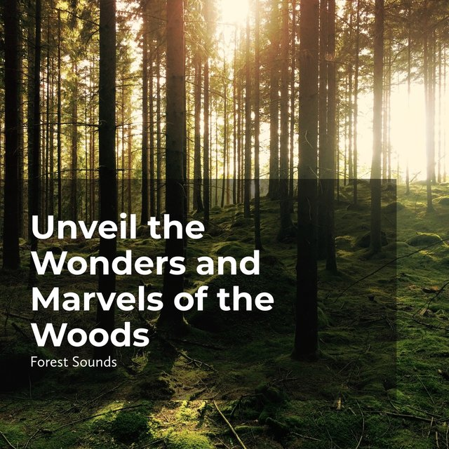 Unveil the Wonders and Marvels of the Woods