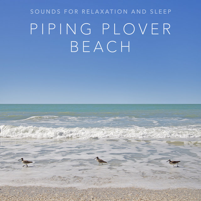 Piping Plover Beach (Sounds for Relaxation and Sleep)