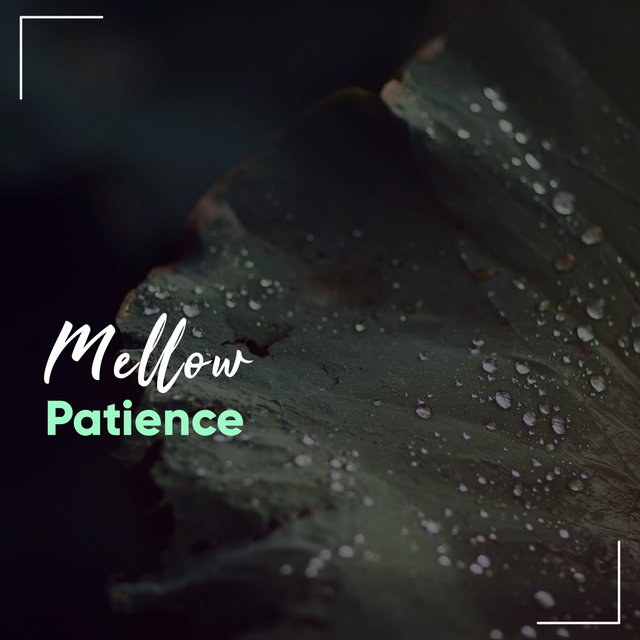 # Mellow Patience