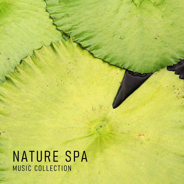 Nature Spa Music Collection – Ambient Nature Sounds for Relaxation During Beauty Treatments, Massage Time, Revitalize, Smooth Skin, Wellness Oasis, Water, Birds