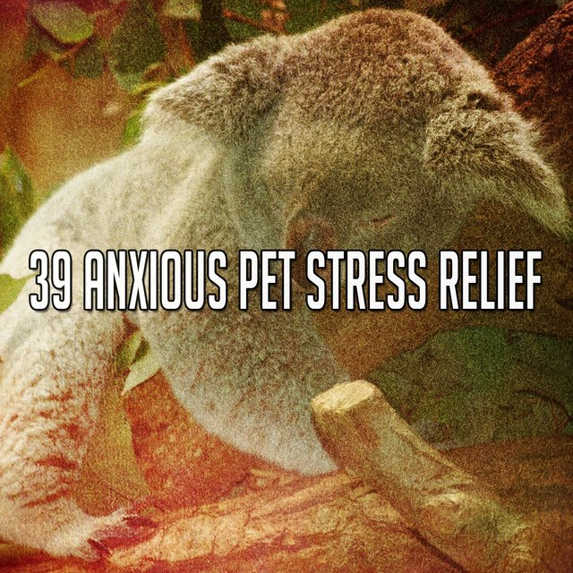 39 Anxious Pet Stress Relief