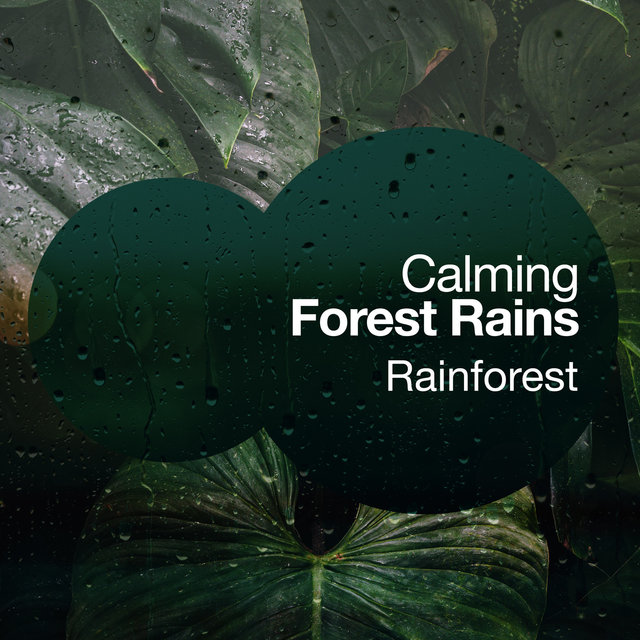 Calming Forest Rains