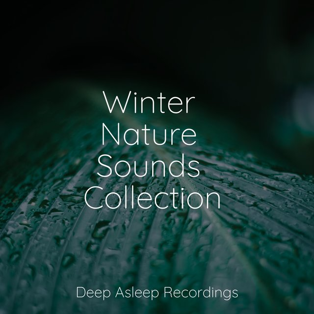 Winter Nature Sounds Collection