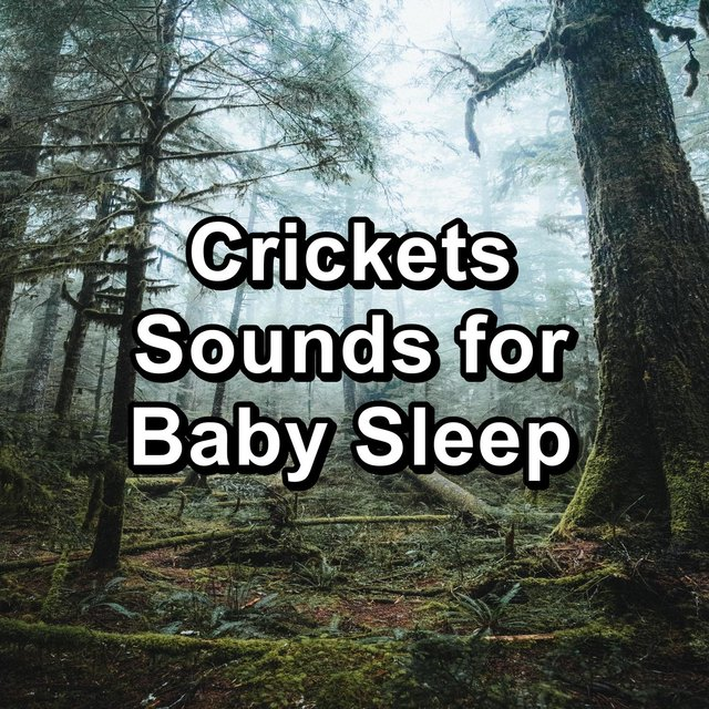 Crickets Sounds for Baby Sleep