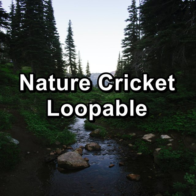 Nature Cricket Loopable