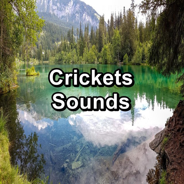 Crickets Sounds