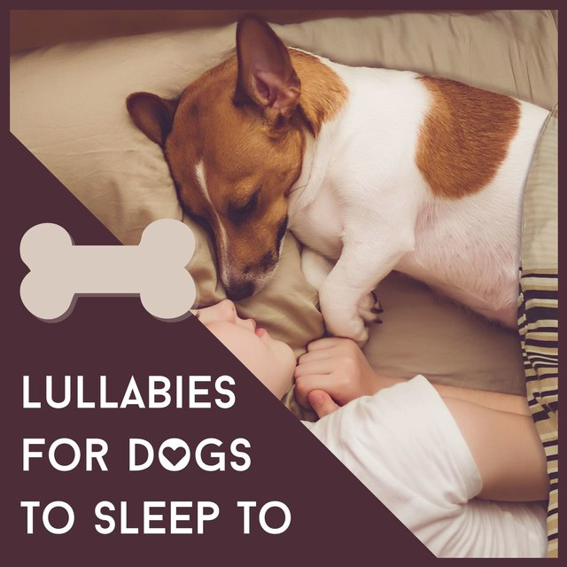 Lullabies for Dogs to Sleep to: Relaxing Music for Sleeping Problems, Anxiety Problems or Stress