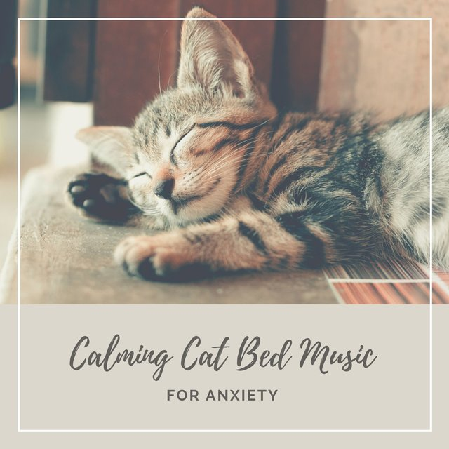 Calming Cat Bed Music for Anxiety