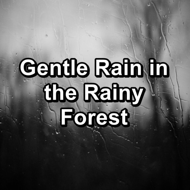 Gentle Rain in the Rainy Forest