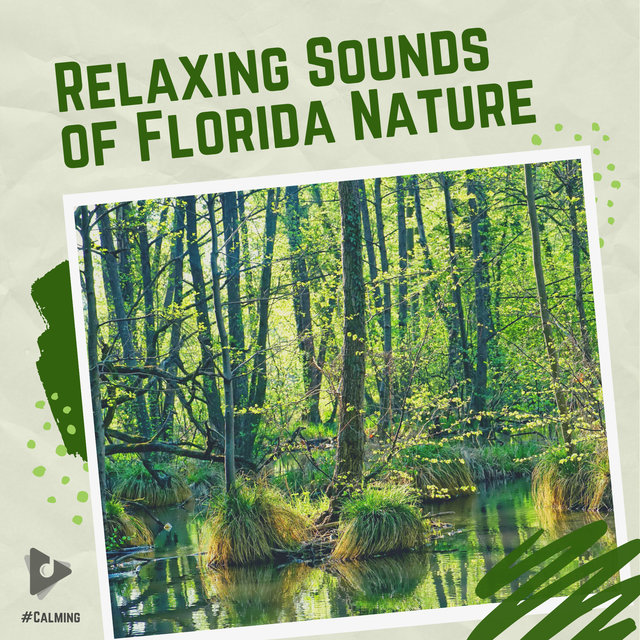 The Relaxing Sounds of Florida Nature