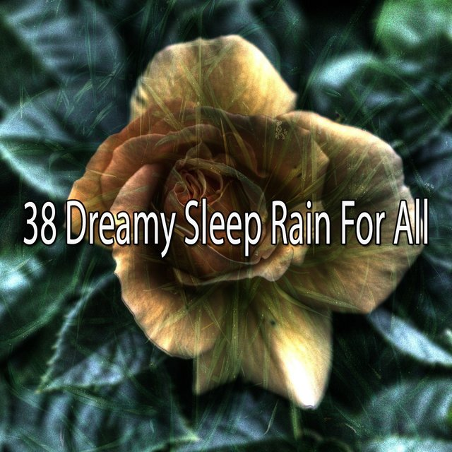 38 Dreamy Sleep Rain for All