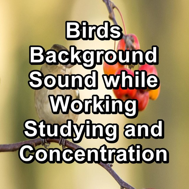 Birds Background Sound while Working Studying and Concentration