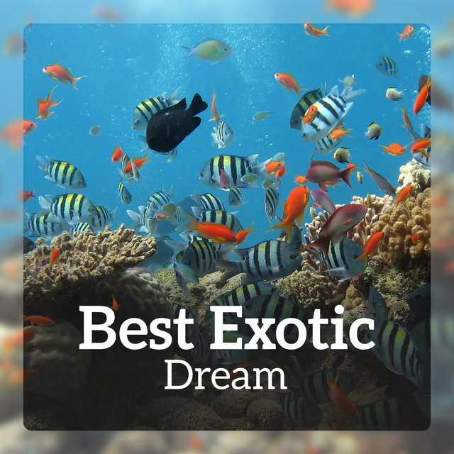 Best Exotic Dream