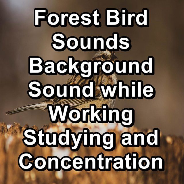 Forest Bird Sounds Background Sound while Working Studying and Concentration