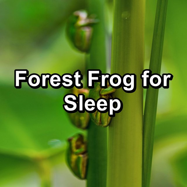 Forest Frog for Sleep