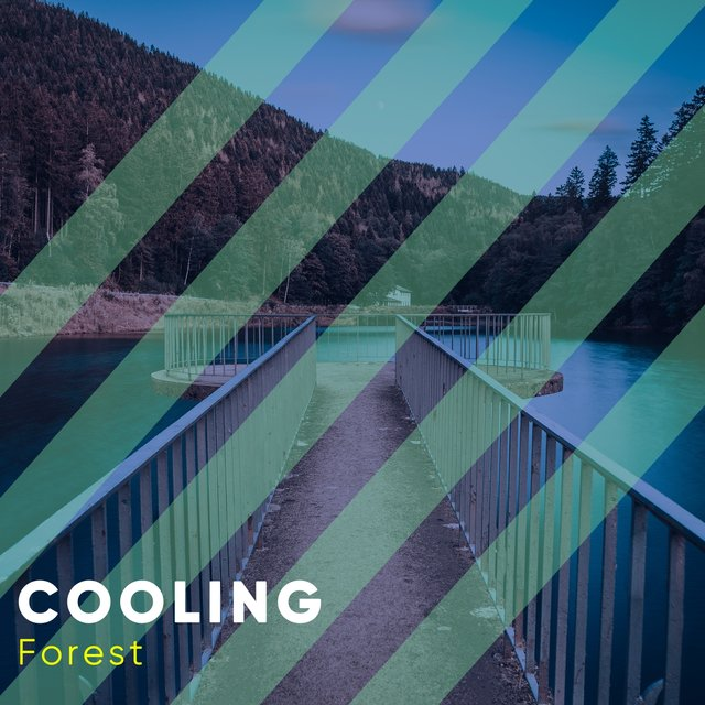# 1 Album: Cooling Forest