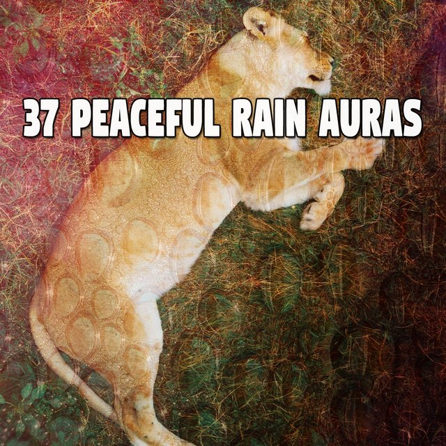 37 Peaceful Rain Auras