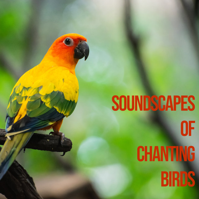 Soundscapes of Chanting Birds