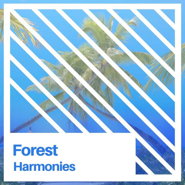 """ Calm Natural Forest Harmonies """