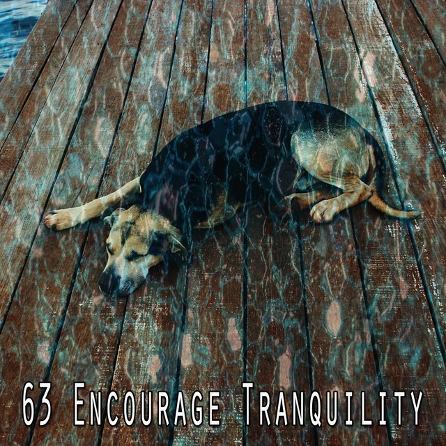 63 Encourage Tranquility