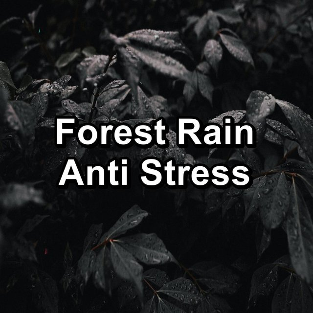 Forest Rain Anti Stress