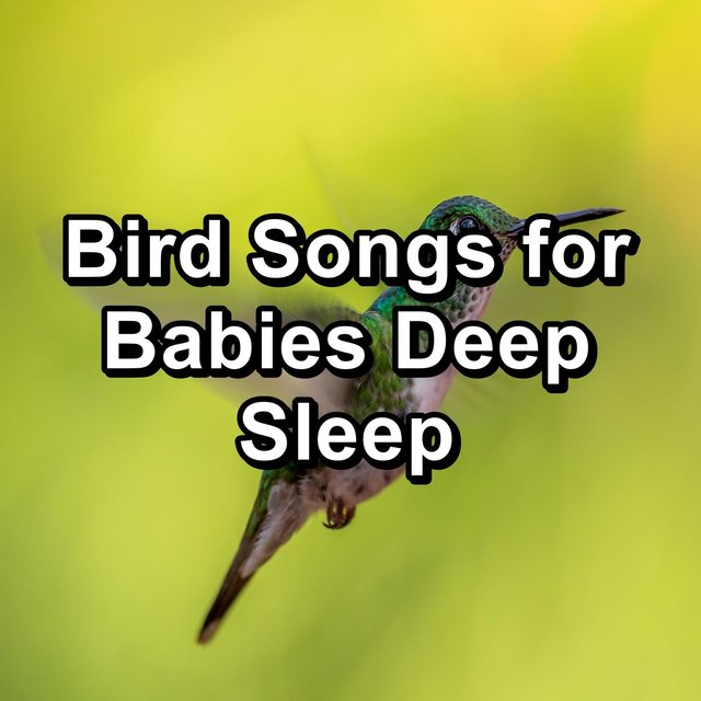 Bird Songs for Babies Deep Sleep