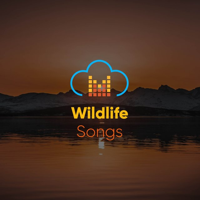 Relaxing Garden Wildlife Songs
