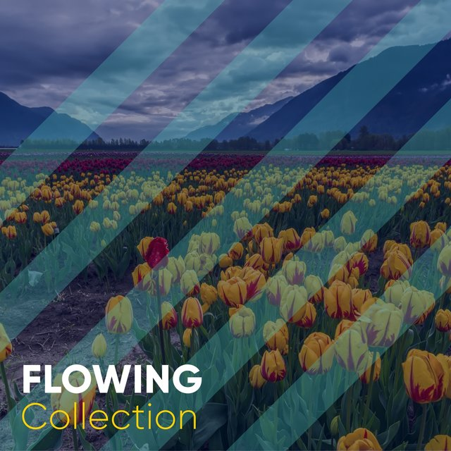 # 1 Album: Flowing Collection