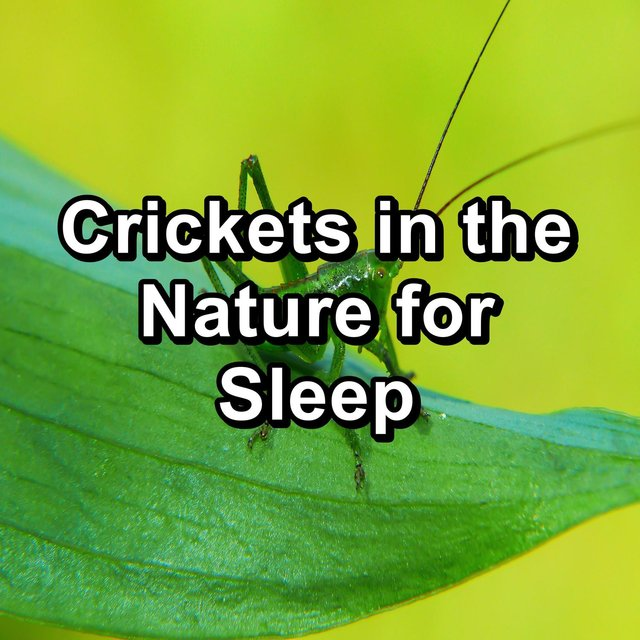 Crickets in the Nature for Sleep