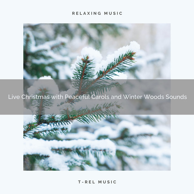Live Christmas with Peaceful Carols and Winter Woods Sounds