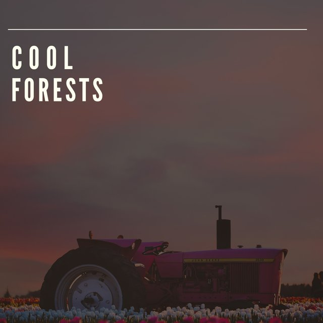 # 1 Album: Cool Forests