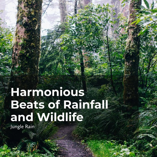 Harmonious Beats of Rainfall and Wildlife