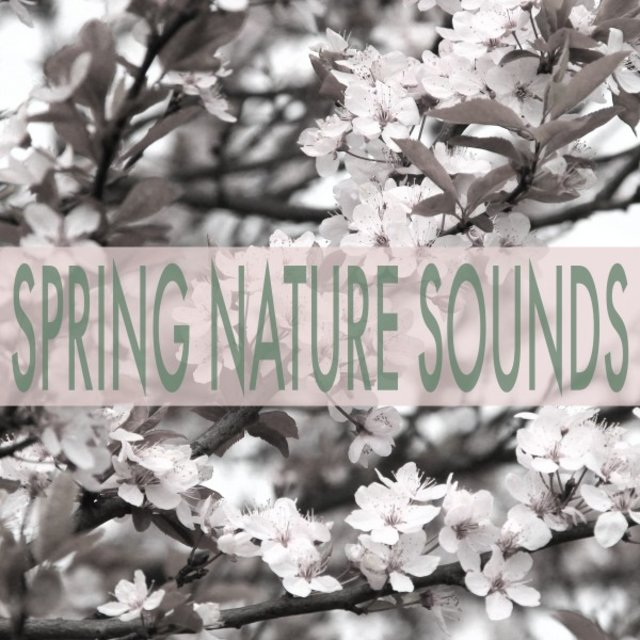 Spring Nature Sounds