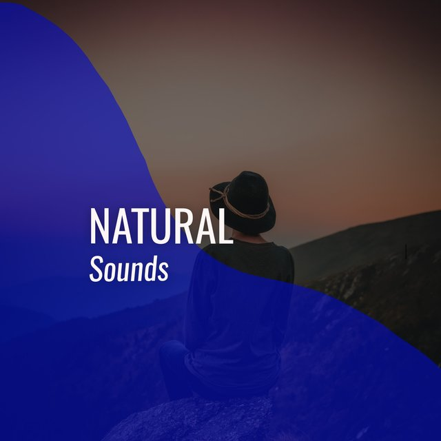 # 1 Album: Natural Sounds