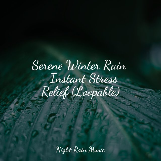 Serene Winter Rain - Instant Stress Relief (Loopable)