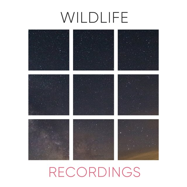Flowing Rustic Wildlife Recordings