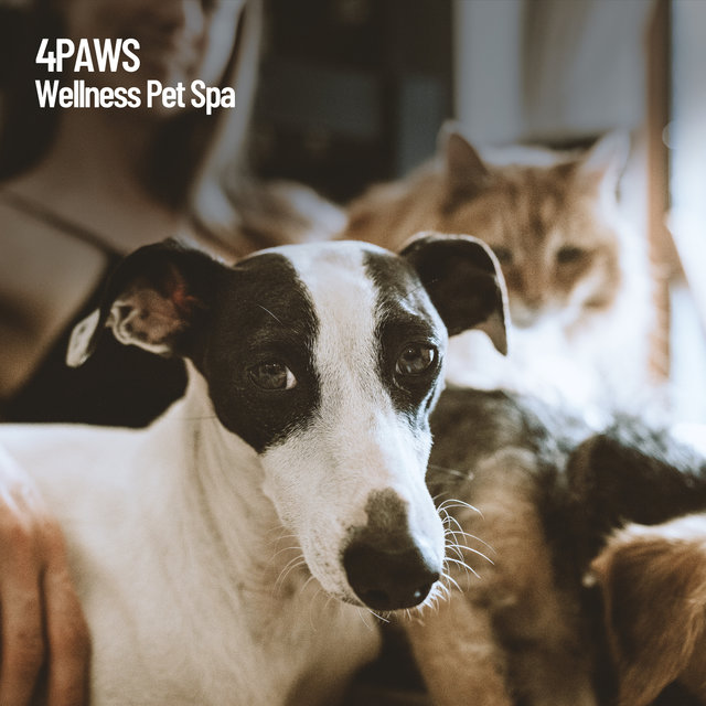 4Paws: Wellness Pet Spa